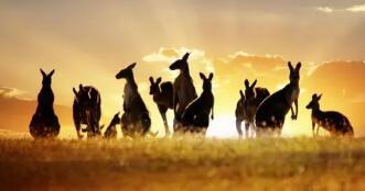 澳洲海淘如何选择转运公司? 细数澳洲转运公司!