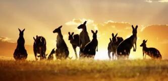澳洲海淘走什么转运好? 最划算的澳洲转运公司推荐!