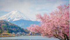 日本海淘转运公司如何选择? 日本转运公司推荐!