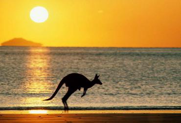 哪个网站买澳洲货正宗?热门澳洲海淘网站推荐!